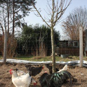 Stadtbauernhof ist Pilotstandort im EU-Projekt AGROMIX